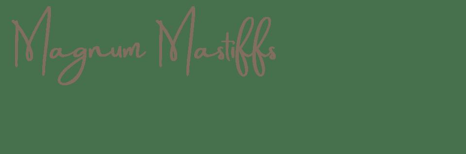 Magnum Mastiffs